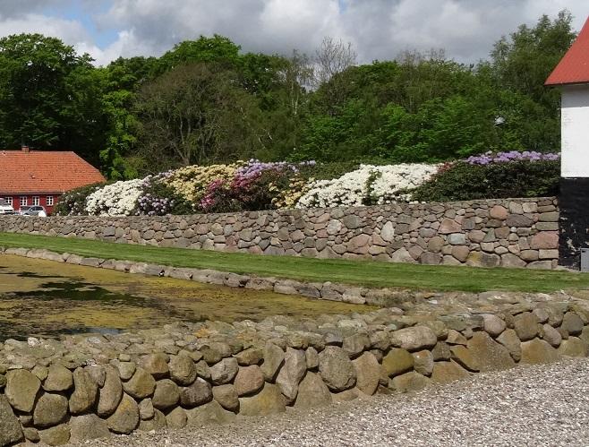Under sin omtale af Kattrup nævnte Henning Bonde, at stedets flotte rododendroner er et besøg værd Foto: F.P.